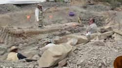 [Wideo] W Meksyku odkryto szczątki nieznanego dotychczas ,,gadatliwego'' dinozaura - miniaturka