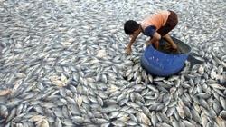 Ryby, ryby, kupujemy ryby... ale nie TAKIE!!! - miniaturka
