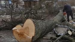 Ministerstwo Środowiska pyta, ile drzew wycięto w latach 2014-16 w Warszawie. Zieleń miejska jest ważna, odpowiada za nią samorząd - miniaturka