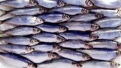 Śledzie czyli ryby pełne zdrowia! - miniaturka