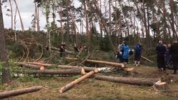 To największa klęska w dziejach polskiego leśnictwa - miniaturka
