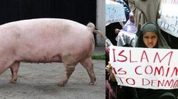 Świnia -Nacjonalistka w państwie duńskim! - miniaturka