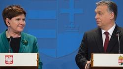 Polak-Węgier dwa bratanki przy europejskim stole - miniaturka