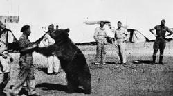Powstaje film animowany o niedźwiedziu Wojtku - miniaturka