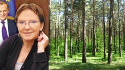 Polskie lasy w ręce Żydów? - miniaturka