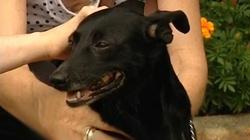 Pies bohater uratował dziecko od śmierci  - miniaturka