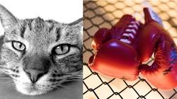 Sadysta znęcał się nad kotem. Bokserzy reagują: Lubisz krzywdzić słabszych? Przyjdź skrzywdzić nas!!! - miniaturka