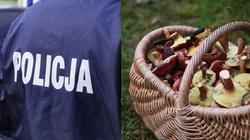 Policja: Masowe zaginięcia grzybiarzy w lasach - miniaturka