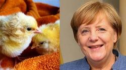 Dla Merkel prawa kur ważniejsze niż dzieci poczętych - miniaturka