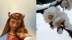 Cud po objawieniach Matki Bożej - drzewa kwitną mimo zimy i mrozu - miniaturka