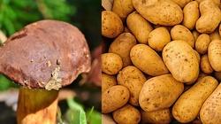 Oto smak jesieni: Ziemniaki faszerowane grzybami! - miniaturka