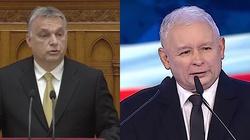 Orban w PE razem z PiS? - miniaturka