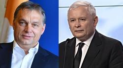 Czy Polacy i Węgrzy ,,przeorają'' Europę? Ryszard Czarnecki dla Frondy - miniaturka