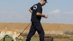 Niemiecki psy potrafią wytropić zarażonych koronawirusem - miniaturka