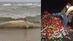 Grzesik: Martwego wieloryba wyeksportować do Rosji! - miniaturka