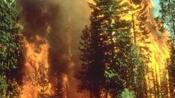 Polskie lasy... płoną. W maju 1300 pożarów - miniaturka