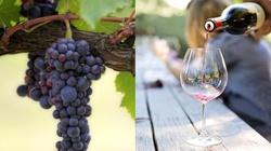 Czy czeka nas rok bez wina? A może dekada? Fatalne informacje od producentów - miniaturka