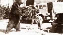 Niedźwiedź patronem przedszkola. Walczył pod Monte Cassino - miniaturka