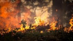Skandal! Greenpeace wykorzystuje dramat Biebrzy. Mimo podpaleń uważa je za efekt globalnego ocieplenia... - miniaturka