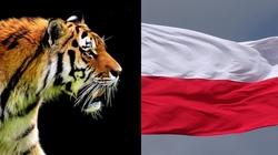 ,,Polski tygrys dogonił azjatyckie'' - miniaturka
