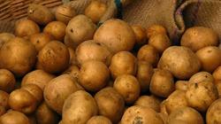 Gardzisz ziemniakami? Krzywdzisz siebie i rodzinę!!! - miniaturka