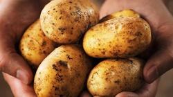 Sok z surowych ziemniaków - cudowny nektar! - miniaturka