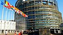 Nareszcie! Parlament Europejski gani Holendrów za dyskryminację Polaków - miniaturka
