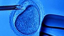 PiS jednoznacznie przeciw zapłodnieniu in vitro. Nareszcie! - miniaturka