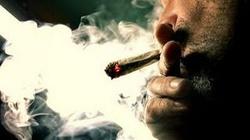 Legalizacja marihuany to polityczny marketing - miniaturka